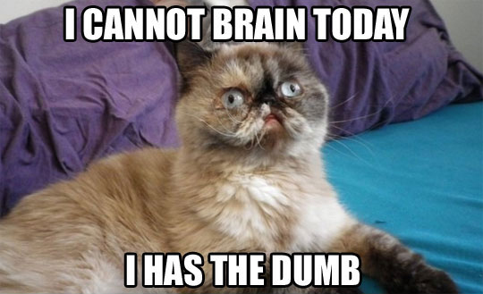 cat-meme-i-cannot-brain-today-dumb